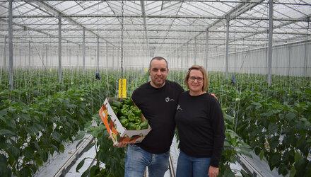 Eerste groene paprika's