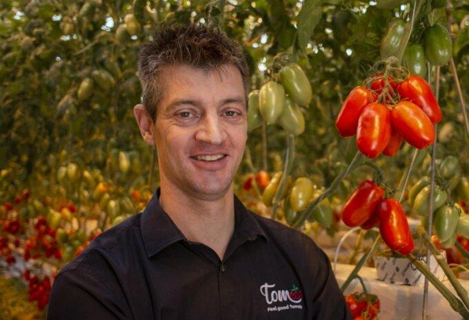 Tomaten uit de serres van Tom Lefevre in Merksplas